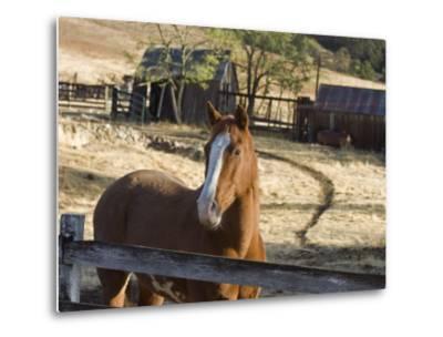 Horse on Santa Rosa Creek Road, Cambria, California-Rich Reid-Metal Print
