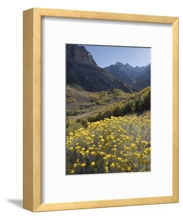 Fall Colors at Mcgee Creek near Mammoth Lakes, California-Rich Reid-Framed Photographic Print