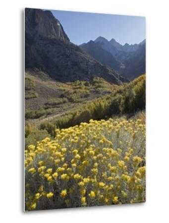 Fall Colors at Mcgee Creek near Mammoth Lakes, California-Rich Reid-Metal Print