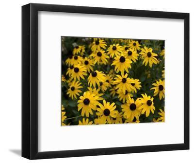 Flowers on the University of Nebraska-Lincoln Campus-Joel Sartore-Framed Photographic Print