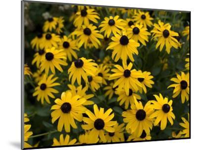 Flowers on the University of Nebraska-Lincoln Campus-Joel Sartore-Mounted Photographic Print