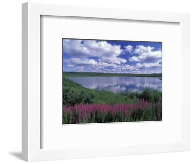 Fireweed, Lake and Clouds Reflecting in a Lake, Alaska-Rich Reid-Framed Photographic Print