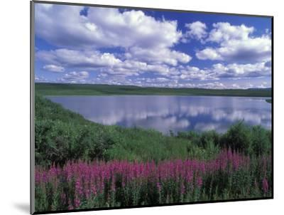 Fireweed, Lake and Clouds Reflecting in a Lake, Alaska-Rich Reid-Mounted Photographic Print