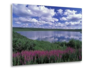 Fireweed, Lake and Clouds Reflecting in a Lake, Alaska-Rich Reid-Metal Print