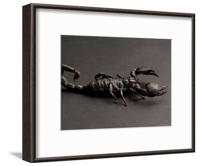 Emperor Scorpion at the Sunset Zoo, Kansas-Joel Sartore-Framed Photographic Print