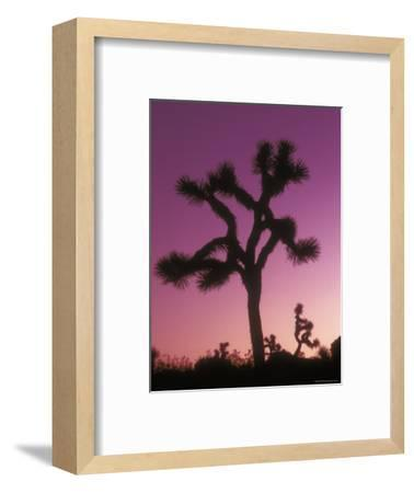 Joshua Trees with Colored Gel, California-Rich Reid-Framed Photographic Print