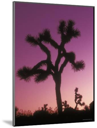 Joshua Trees with Colored Gel, California-Rich Reid-Mounted Photographic Print