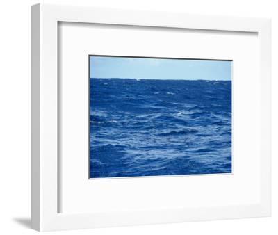 Flock of Wilsons Storm Petrels Feeding on the Ocean Surface, Australia-Jason Edwards-Framed Photographic Print