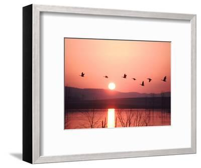 Flock of Canada Geese Flying over a Lake at Sunset, Pennsylvania-Ira Block-Framed Photographic Print