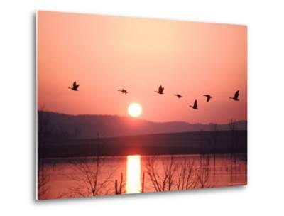 Flock of Canada Geese Flying over a Lake at Sunset, Pennsylvania-Ira Block-Metal Print