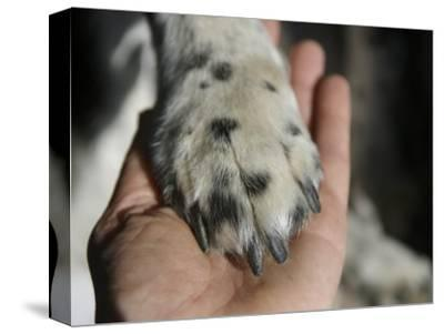 Dog Paw, Low Section, Bolinas, California-Brimberg & Coulson-Stretched Canvas Print