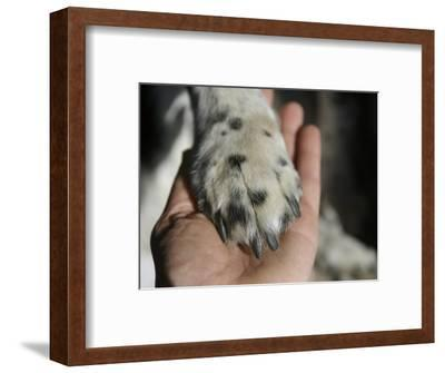 Dog Paw, Low Section, Bolinas, California-Brimberg & Coulson-Framed Photographic Print