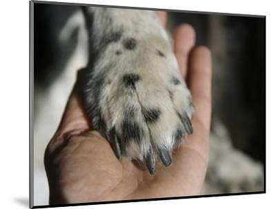 Dog Paw, Low Section, Bolinas, California-Brimberg & Coulson-Mounted Photographic Print