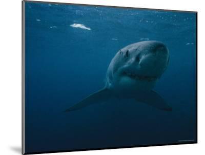 Great White Shark, Australia-Bill Curtsinger-Mounted Photographic Print