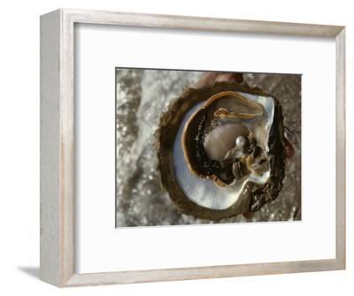 Cultured Pearl Grows in a Two-Year Old Oyster, Australia-David Doubilet-Framed Photographic Print