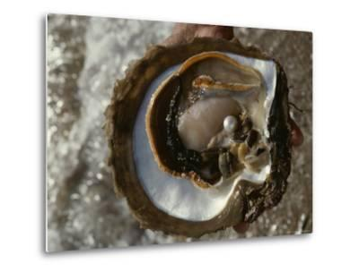 Cultured Pearl Grows in a Two-Year Old Oyster, Australia-David Doubilet-Metal Print