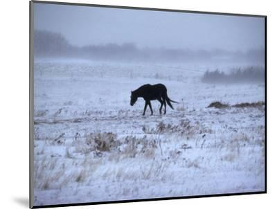 One Horse Walking Along in Winter Snow Storm, Kansas-Brimberg & Coulson-Mounted Photographic Print