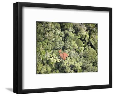 Remnant Forest in Mindongy du Sud National Park, Se Madagascar-Michael Fay-Framed Photographic Print