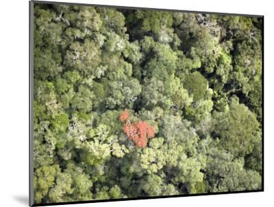 Remnant Forest in Mindongy du Sud National Park, Se Madagascar-Michael Fay-Mounted Photographic Print