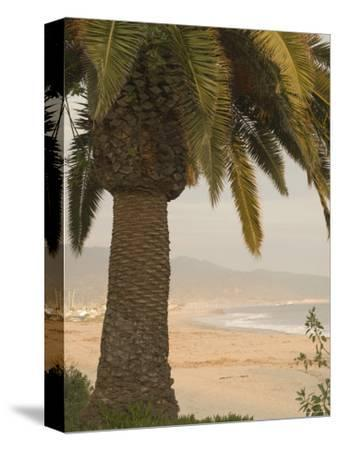 Palm Tree with Coastal Cityscape in Background, California-James Forte-Stretched Canvas Print