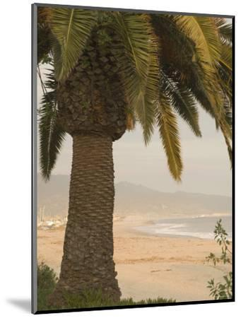 Palm Tree with Coastal Cityscape in Background, California-James Forte-Mounted Photographic Print