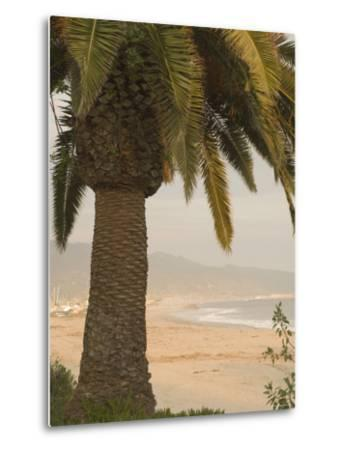 Palm Tree with Coastal Cityscape in Background, California-James Forte-Metal Print