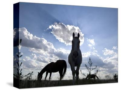 The Sun Shines Through Clouds on Some Horses in Burwell, Nebraska-Joel Sartore-Stretched Canvas Print