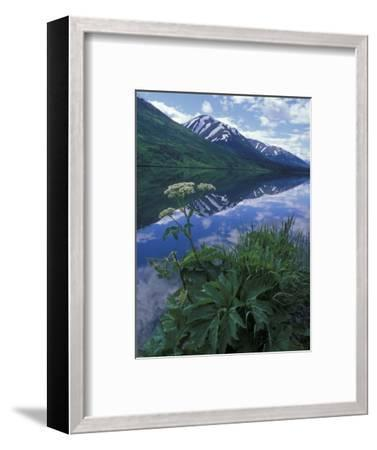 Summit Lake, Cow Parsnip, Lake and Mountains, Alaska-Rich Reid-Framed Photographic Print