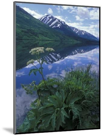 Summit Lake, Cow Parsnip, Lake and Mountains, Alaska-Rich Reid-Mounted Photographic Print