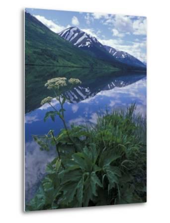 Summit Lake, Cow Parsnip, Lake and Mountains, Alaska-Rich Reid-Metal Print