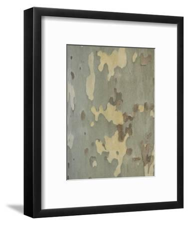 Sycamore Trees in St. Louis-Joel Sartore-Framed Photographic Print