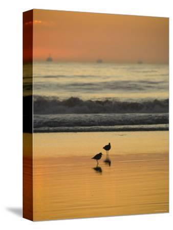 Two Sea Birds Standing in the Surf at Sunset, California-James Forte-Stretched Canvas Print
