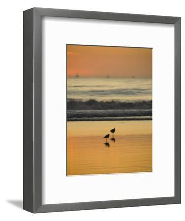 Two Sea Birds Standing in the Surf at Sunset, California-James Forte-Framed Photographic Print