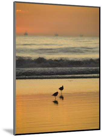 Two Sea Birds Standing in the Surf at Sunset, California-James Forte-Mounted Photographic Print