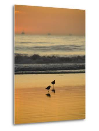 Two Sea Birds Standing in the Surf at Sunset, California-James Forte-Metal Print