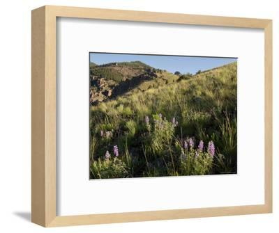 Sunrise and Spring Wildflowers, Colorado-Michael S^ Lewis-Framed Photographic Print