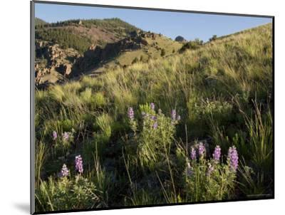 Sunrise and Spring Wildflowers, Colorado-Michael S^ Lewis-Mounted Photographic Print