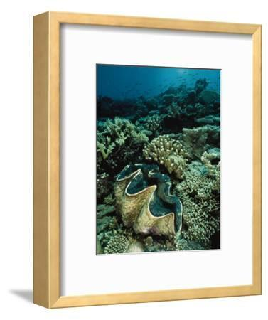 Underwater Vista of a Reef Off Bikini Atoll Reveals a Giant Clam and Various Corals-Bill Curtsinger-Framed Photographic Print
