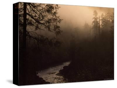 South Fork of Smith River at Sunrise, California-Phil Schermeister-Stretched Canvas Print