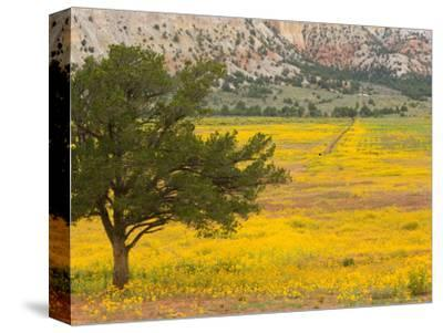 Wildflowers Along Hwy 96, New Mexico-Michael S^ Lewis-Stretched Canvas Print