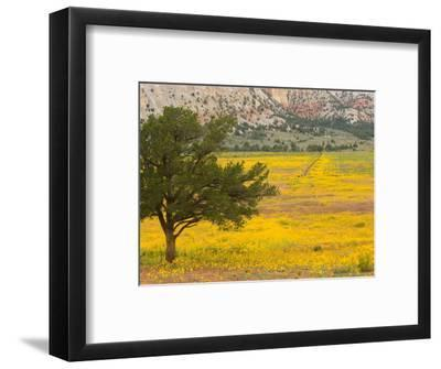 Wildflowers Along Hwy 96, New Mexico-Michael S^ Lewis-Framed Photographic Print
