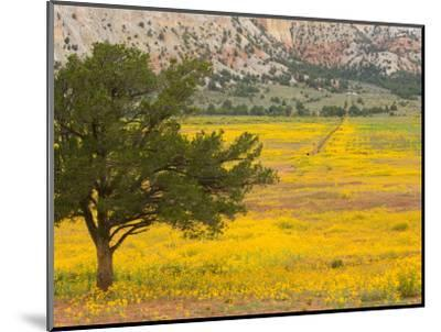Wildflowers Along Hwy 96, New Mexico-Michael S^ Lewis-Mounted Photographic Print