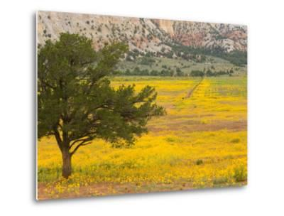 Wildflowers Along Hwy 96, New Mexico-Michael S^ Lewis-Metal Print