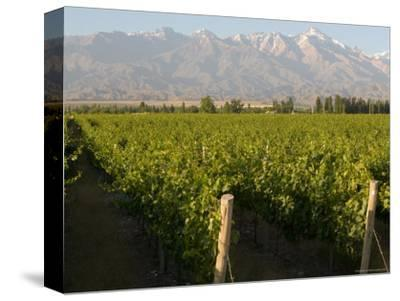Vineyards in the Mendoza Valley with the Andes in the Background-Michael S^ Lewis-Stretched Canvas Print