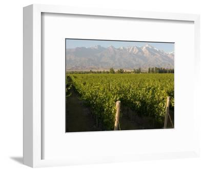 Vineyards in the Mendoza Valley with the Andes in the Background-Michael S^ Lewis-Framed Photographic Print