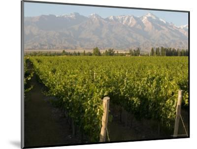 Vineyards in the Mendoza Valley with the Andes in the Background-Michael S^ Lewis-Mounted Photographic Print