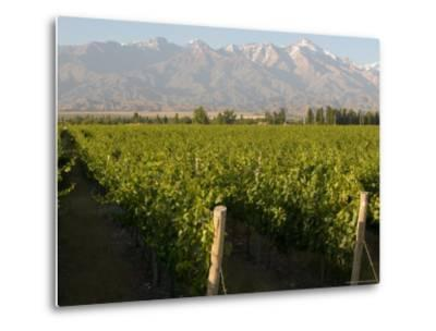 Vineyards in the Mendoza Valley with the Andes in the Background-Michael S^ Lewis-Metal Print