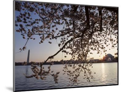 Washington Monument and Jefferson Memorial with Cherry Blossom Trees, Washington, D.C.-Kenneth Garrett-Mounted Photographic Print