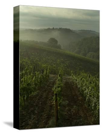 Vineyards Along the Chianti Hillside Through the Fog, Tuscany, Italy-Todd Gipstein-Stretched Canvas Print