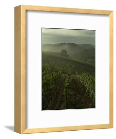 Vineyards Along the Chianti Hillside Through the Fog, Tuscany, Italy-Todd Gipstein-Framed Photographic Print